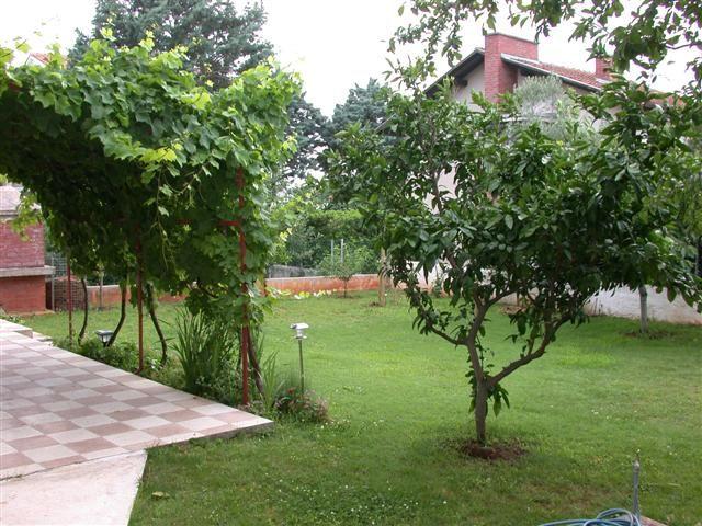 Деревья для сада дачного участка